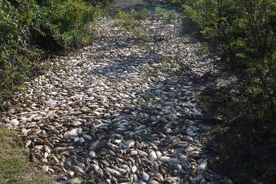 Entregan resultados sobre mortandad de peces en río Confuso