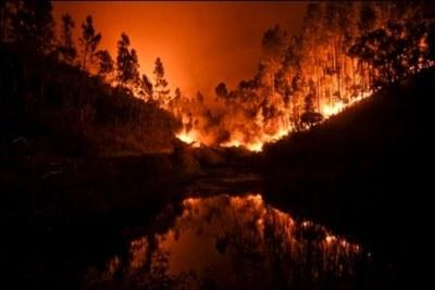 Incendio forestal deja más de 60 muertos en Portugal