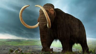 Los científicos resuelven el misterio de la muerte de los mamuts machos