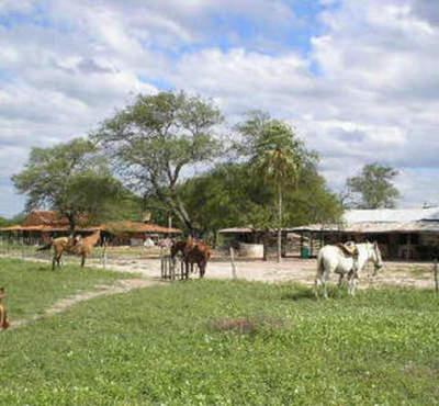 Juez prohíbe que los niños realicen trabajos con caballos