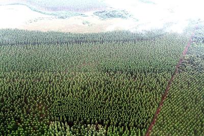 Catastro aclara sobre exenciones tributarias a bosques nativos
