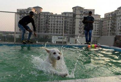Los perros tienen su hotel de lujo en India