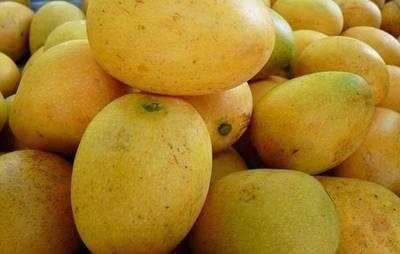 Paraguay exportará mango a Europa y echa ojo a Asia