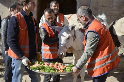 Ciudad turca jubila a tres burros recogebasuras con música de Mozart