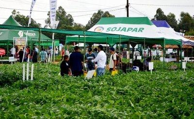 La soja se consolida en exportación, pero su procesamiento local decae