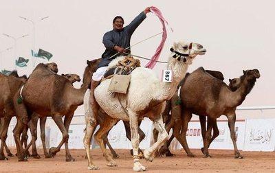Tunean a camello para concurso de belleza