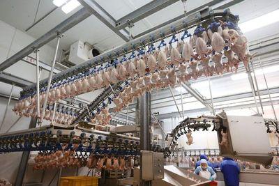 Omán muestra interés en comprar pollos procesados