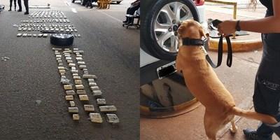 CAN ANTIDROGAS DETECTA 300 PANES DE MARIHUANA EN EL PUENTE INTERNACIONAL