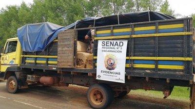 Incautan 1.700 kilos de marihuana en camión de tabaco