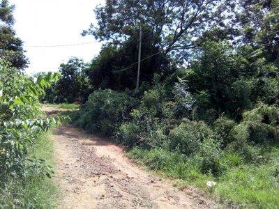 Reclaman limpieza de baldíos en Paraguarí