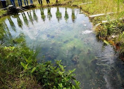 Diversas amenazas se ciernen sobre el gran tesoro natural del Pantanal