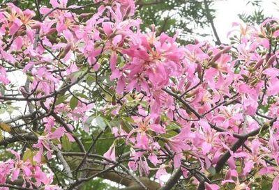 Los borrachos en flor