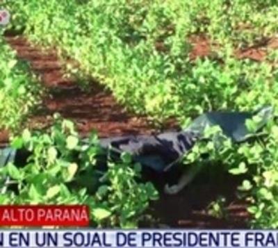 Cae pareja de joven encontrada muerta en sojal de Presidente Franco