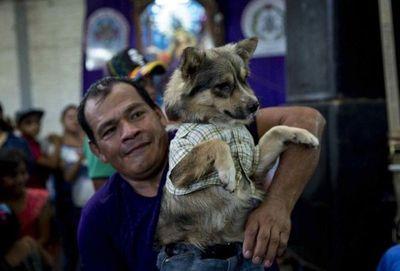El 95% de latinoamericanos considera a sus perros parte de la familia