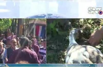 Animales aparecieron muertos en Cordillera