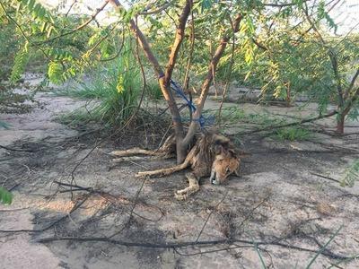Perro fue atado a un árbol y falleció