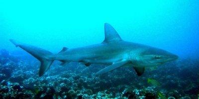 Muere un joven tras ser atacado por un tiburón en Brasil