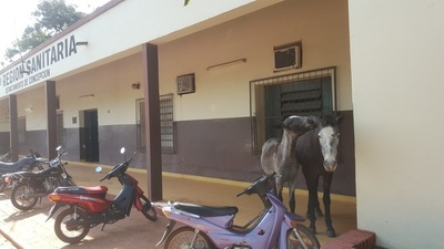 Animales sueltos hasta en local sanitario