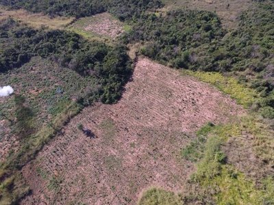 Destruyen hectáreas de marihuana