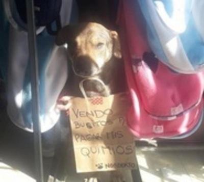 Perrito con cáncer 'vende' ropitas: Enternece y a la vez crea polémica