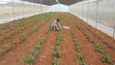Escuela Agrícola de Concepción recibe aporte japonés