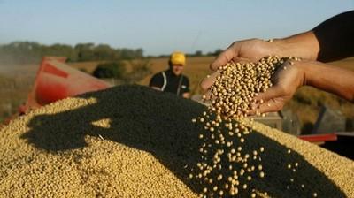 El precio de la soja en Chicago sigue presionada a la baja