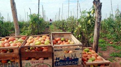 Tomateros, hartos del contrabando
