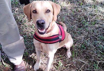 Kóa ha'e Seiko: Perro rescatista entrenado netamente ¡en guaraní!