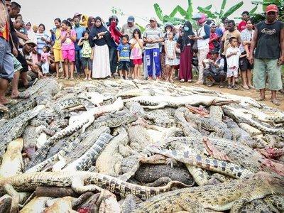 Aldeanos matan 292 cocodrilos para vengar la muerte de un vecino