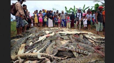 Matan 292 cocodrilos por venganza