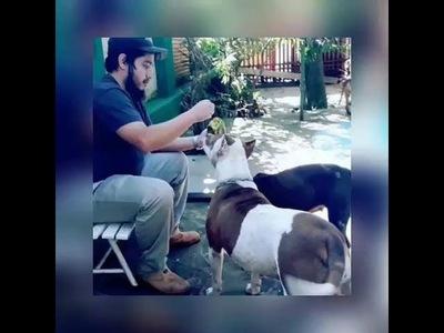 Fue víctima de un pitbull: ''No puedo odiarlos, actúan por impulso''