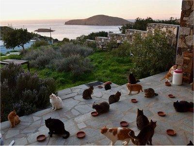 Buscan a amantes de gatos que quieran mudarse a isla paradisíaca