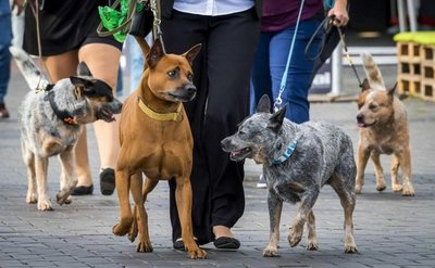 Un laboratorio quiere saber cómo piensan los perros
