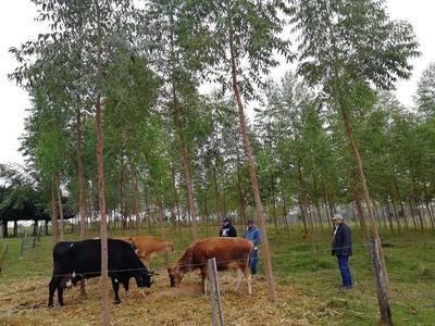 Asisten a productores lecheros de Santa Rosa del Mbutuy