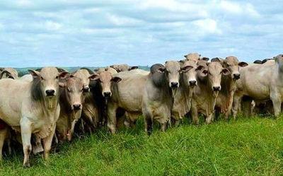 El mercado del ganado para faena cerró la semana con tendencia al alza