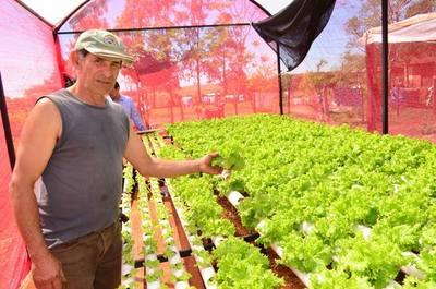San Ignacio: Implementan sistema de hidroponía para la producción de lechuga
