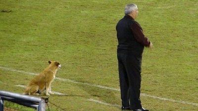 """La perra que se convirtió en """"asistente"""" de Jara Saguier"""