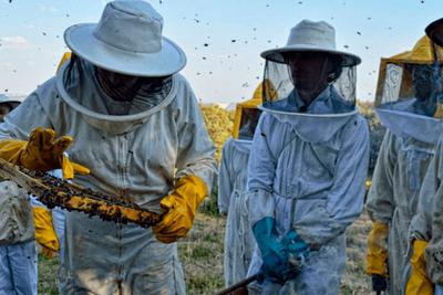 Francia prohíbe insecticidas para proteger abejas