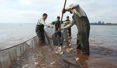 Itaipú siembra más de 2.000 peces en su lago