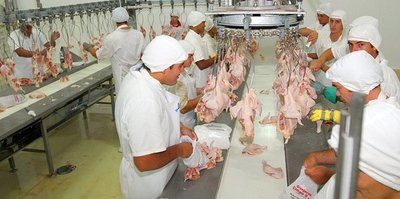 Desmienten uso de hormonas en pollos