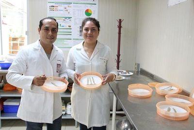 Crean cubiertos comestibles altamente nutritivos