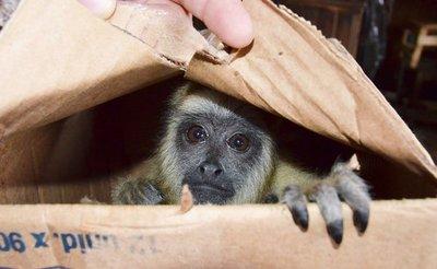Rescatan animales silvestres del Mercado Municipal N° 4