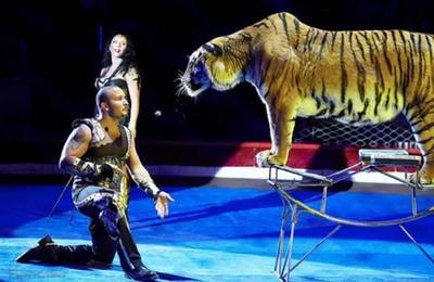 Tigresa sufre un ataque de convulsiones durante un espectáculo