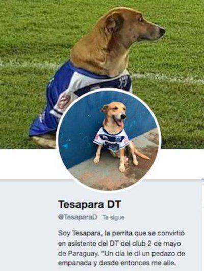 """""""Tesapara"""" ya tiene su cuenta de Twitter"""