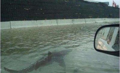 Tiburón en la avenida