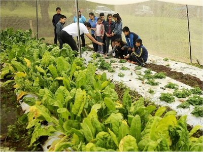 Alumnos de ecoescuela encarnacena   siembran y consumen su cosecha
