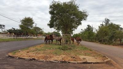 Animales sueltos decoran nuevo asfaltado