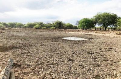 Unas 100 familias desesperadas por sequía