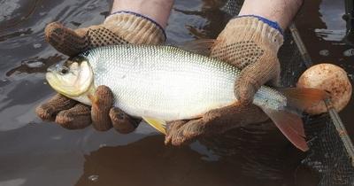 Se refuerza control en zona de embalse tras inicio de veda pesquera