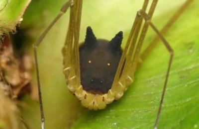 La aterradora 'araña' con cabeza de perro fotografiada en la selva ecuatoriana